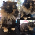 Cat Before & After Groom