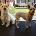Dog Before & After Groom