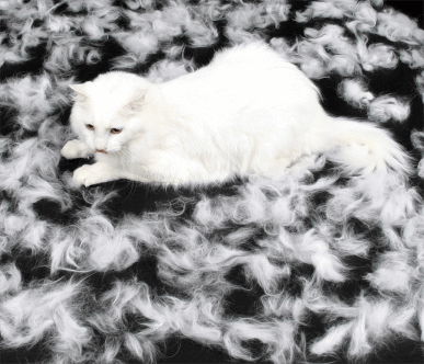 Shedding Cat